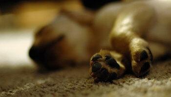 Envenenamiento de perros en zona norte