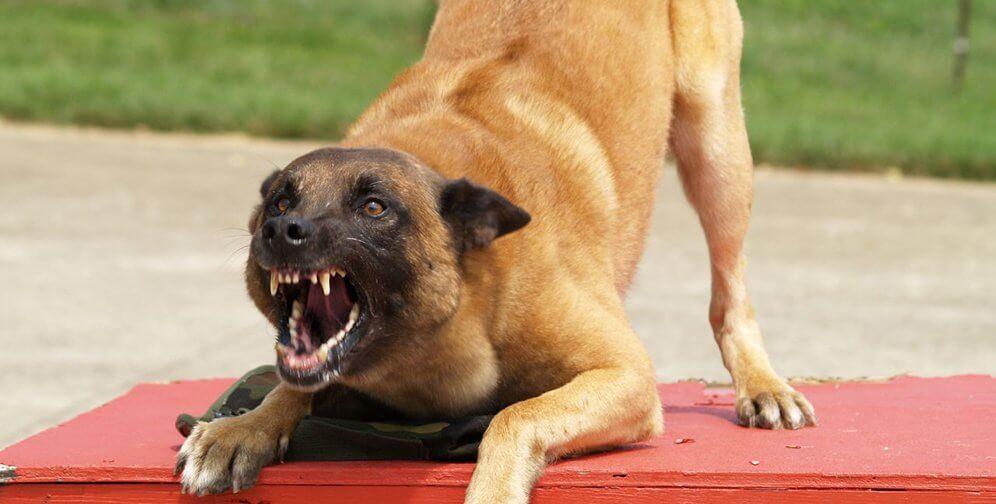 Accidente por perros en Las Parejas