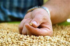 La soja es el cultivo que más aportó por retenciones; hoy tiene una alícuota del 30%
