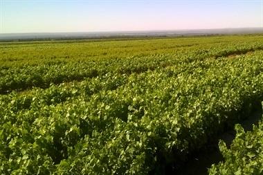 Vivero de 100 hectáreas en San Martín, Mendoza